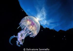 Contact solar by Salvatore Ianniello