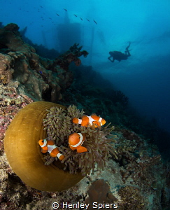 Nemo spotting as the sun starts to go down in Moalboal, P... by Henley Spiers