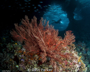Boo windows, Raja Ampat by John Parker