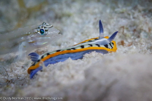 """""""Buddy Check"""" A Purple Crowned Sea Goddess and a Sand Go... by Dusty Norman"""