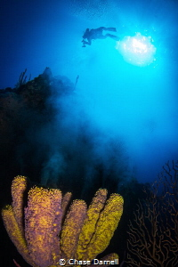 """""""Smoke Stack"""" A Spawning Sponge releases what looks like... by Chase Darnell"""