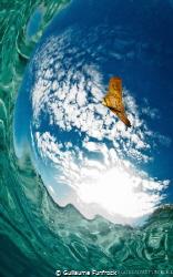 batfish in the sky / A batfish between my fisheye lens an... by Guillaume Funfrock