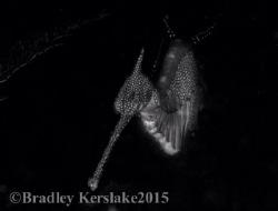 A black and white dragon! Nikon d7100 by Bradley Kerslake