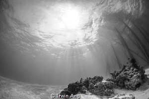 S U N B U R S T 