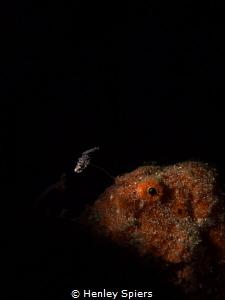 'Fishing in the Dark' by Henley Spiers
