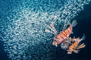 Hunting in Cedar's Pride wreck. by Mehmet Salih Bilal
