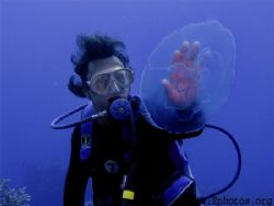 Divemaster touching the outer dome of a moon jellyfish. T... by Zaid Fadul