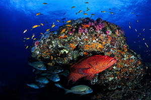~ Stop Pushing It into Red ~ Celebrating Ocean conservat... by Geo Cloete