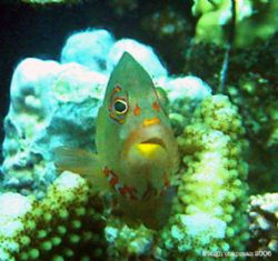 Unidentified Subject. Palau. Poor dude looks as if he got... by Leigh Chapman