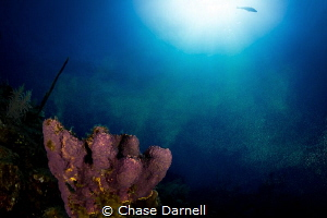 """""""Green Snow"""" A Sponge spawning on the edge of the wall. by Chase Darnell"""
