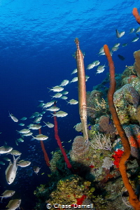 """""""Fish Life""""  There is a certain ridge on the dive site B... by Chase Darnell"""