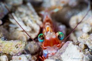 """Shrimp in the Shallow depth"" by Wayne Jones"