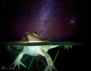 Night Swimming by Steven Miller