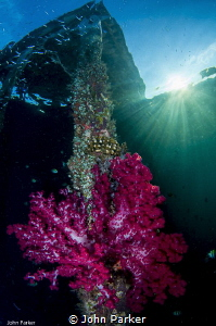 Corals on Arborek Jetty by John Parker