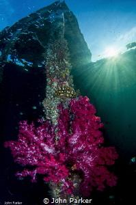 Corals on Arborek Jetty by John Parker