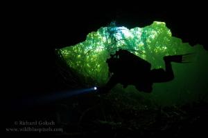 Cenote Tajma Ha-Mexico  by Richard Goluch