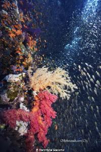 Turbion. Sharm El Sheik Nikon df800E , 10,5 mm , two st... by Marchione Giacomo