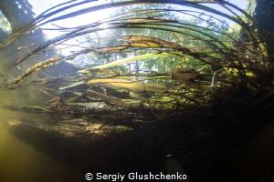 River Siverskii Donets by Sergiy Glushchenko