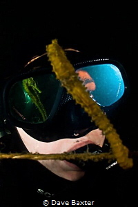 Reflections of a seahorse in C minor by Dave Baxter