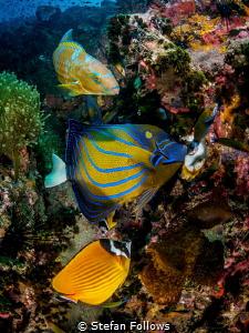 Wonderwall. Sail Rock, Thailand-EM5-Panasonic 8mm-iso200-... by Stefan Follows