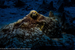 """Spot Light"" 