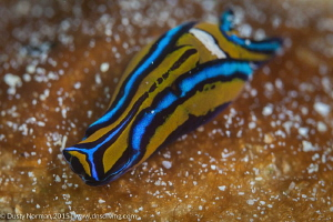 """Sluggin""