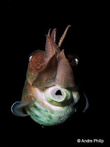 """Whistleblower? ;-)"" - The smart cuttlefish by Andre Philip"