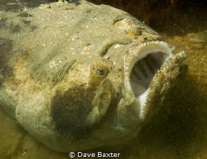 stargazer settling in by Dave Baxter
