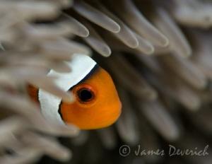 Peeking out by James Deverich