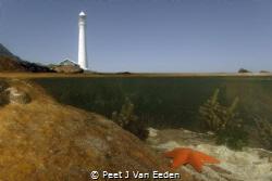 The lonely star fish by Peet J Van Eeden
