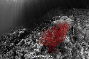 Black white and red by John Parker