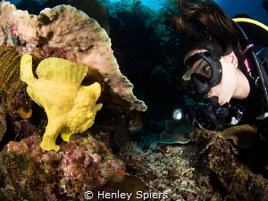 Jade & the Frogfish by Henley Spiers