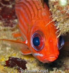 This squirrel fish stayed just long enough to snap this s... by Jayme Kegel