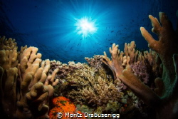 Reef scene at TATAWA BESAR i the Komodo National Park by Moritz Drabusenigg