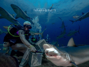 Feeding Sharks in Nassau, Bahamas by Jan Morton