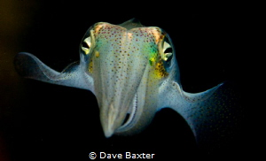 squid at night by Dave Baxter