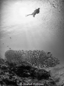 The Watcher. Sail Rock, Thailand-EM5-Panasonic 8mm-iso200... by Stefan Follows