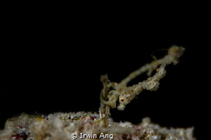 T H E - D R A G O N