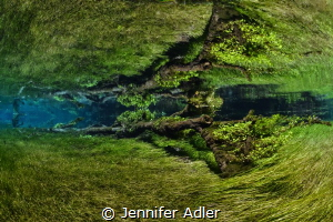 Freshwater Forest - A fallen tree joins the underwater me... by Jennifer Adler
