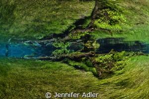 Freshwater Forest - A fallen tree joins the underwater me... by Jennifer Adler