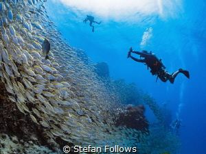 Go with the flow ... ! Oxeye Scad - Selar boops. Sail Roc... by Stefan Follows