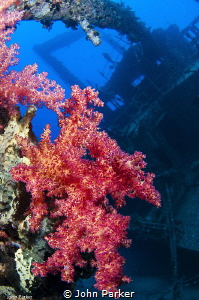 Corals on the Ghiannis D by John Parker