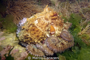 OCTOPUS RELAX by Marco Caraceni