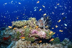 """""""Aquarium"""" Seascape by Marteyne Van Well"""