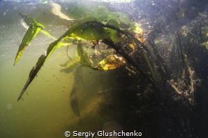 River. by Sergiy Glushchenko