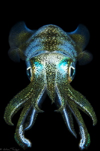 filipino squid by Mathieu Foulquié