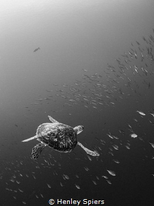 Turtles' Flight Took me a while to realise there is a se... by Henley Spiers
