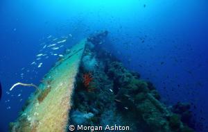 The hull of the SS Yongala  by Morgan Ashton