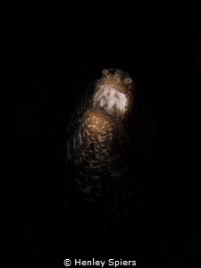 'The Scream of Nature' I used snoot lighting to just bri... by Henley Spiers