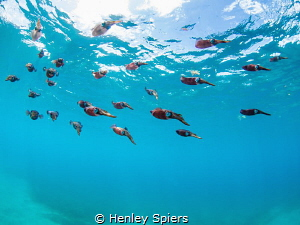 Squid School by Henley Spiers